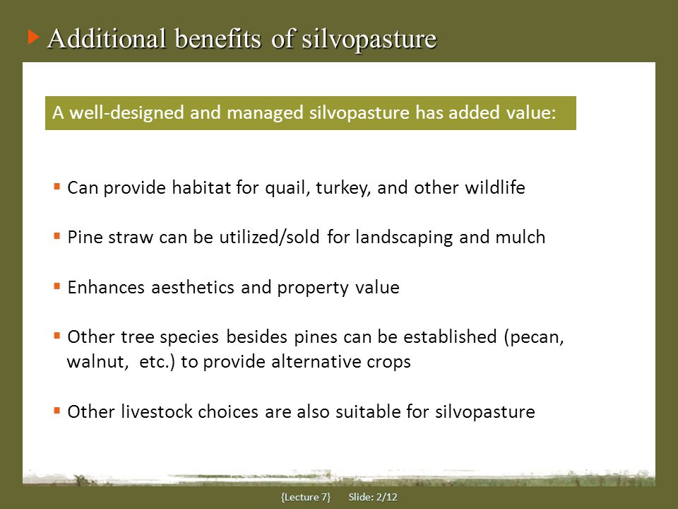 Additional benefits of silvopasture {Lecture 7} Slide: 2/12 A well-designed and managed silvopasture has added value:  Can provide habitat for quail, turkey, and other wildlife  Pine straw can be utilized/sold for landscaping and mulch  Enhances aesthetics and property value  Other tree species besides pines can be established (pecan, walnut, etc.) to provide alternative crops  Other livestock choices are also suitable for silvopasture