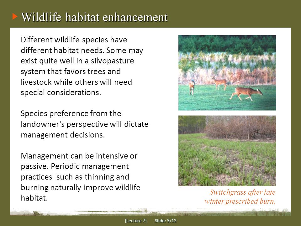 Forage choices for wildlife {Lecture 7} Slide: 4/12 Overseeding cool season grasses and legumes can greatly increase food supplies - especially for deer and turkey.