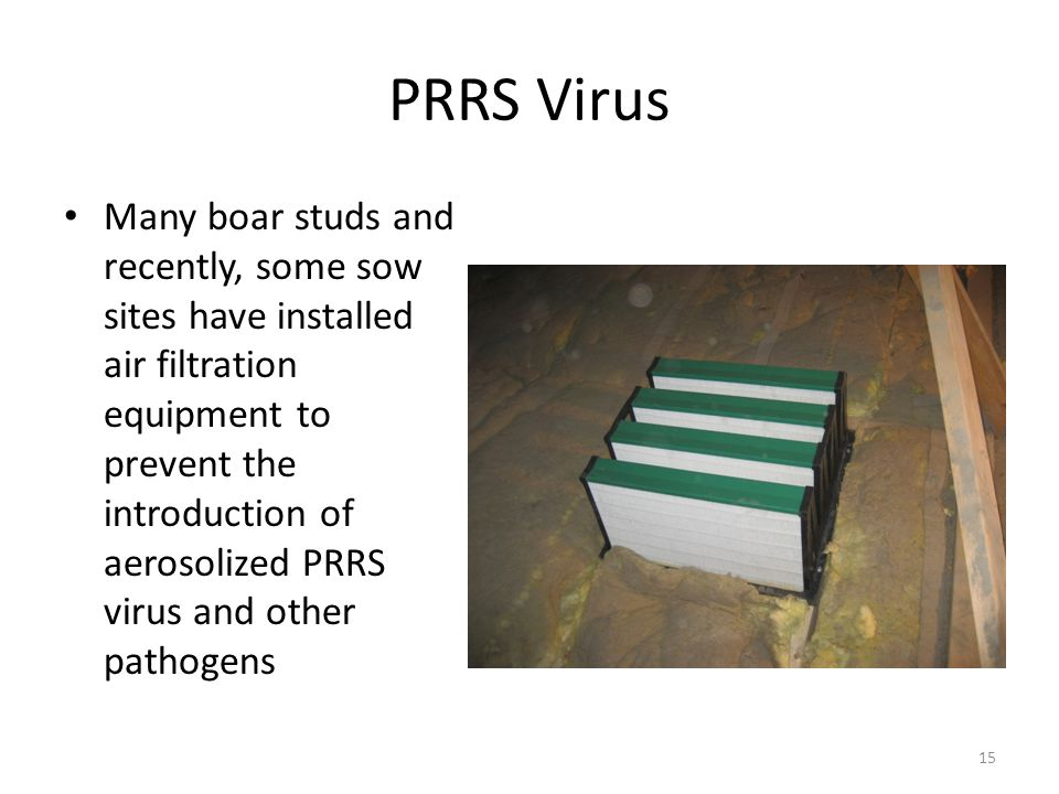 PRRS Virus Many boar studs and recently, some sow sites have installed air filtration equipment to prevent the introduction of aerosolized PRRS virus