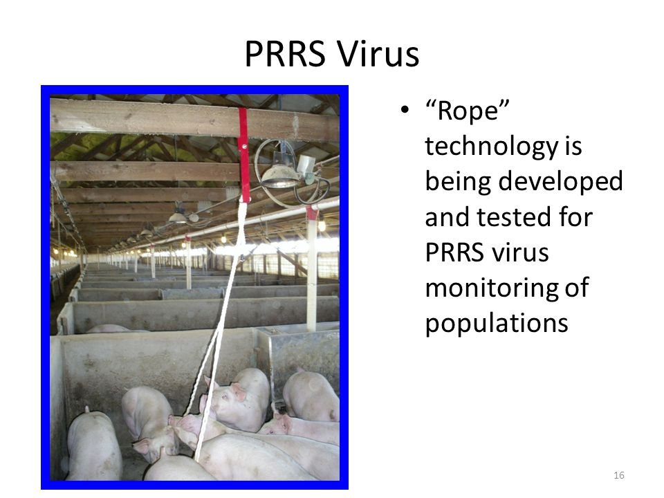 "PRRS Virus ""Rope"" technology is being developed and tested for PRRS virus monitoring of populations 16"