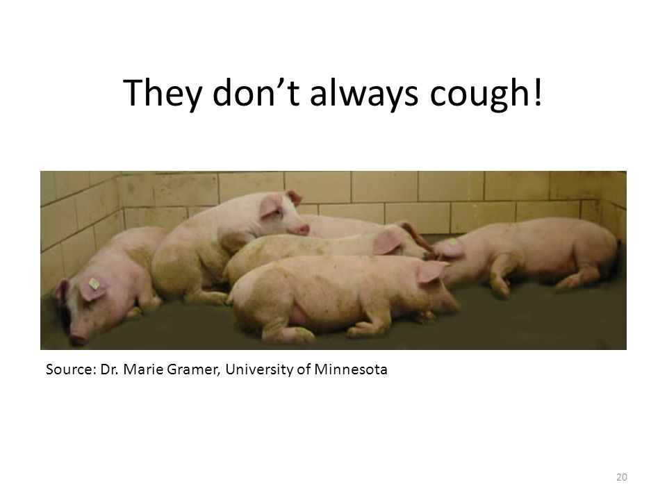 Source: Dr. Marie Gramer, University of Minnesota They don't always cough! 20