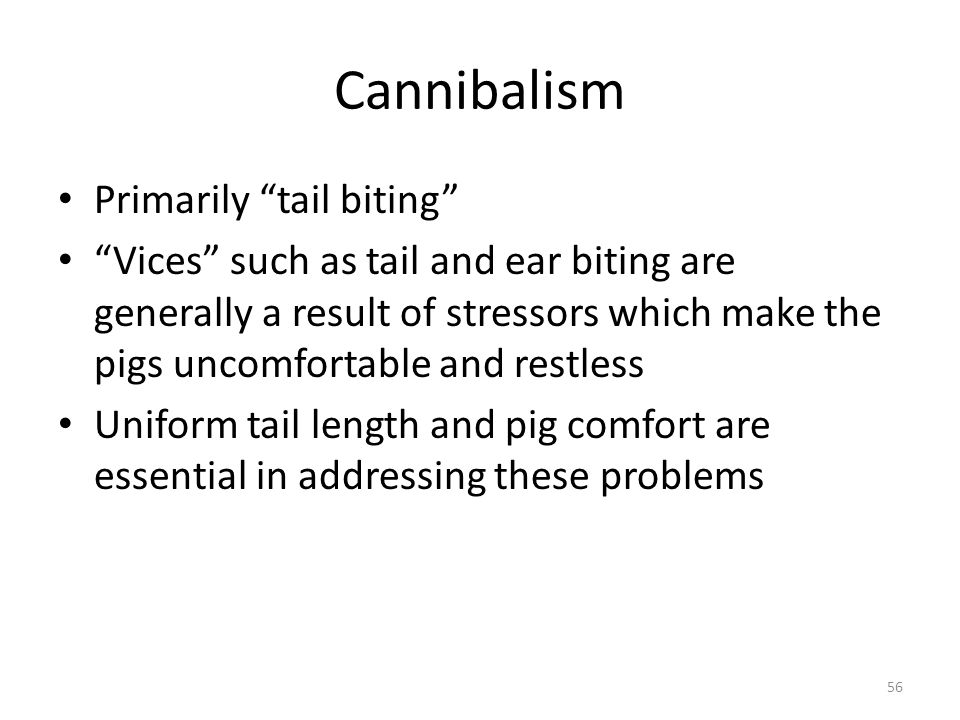 "Cannibalism Primarily ""tail biting"" ""Vices"" such as tail and ear biting are generally a result of stressors which make the pigs uncomfortable and rest"