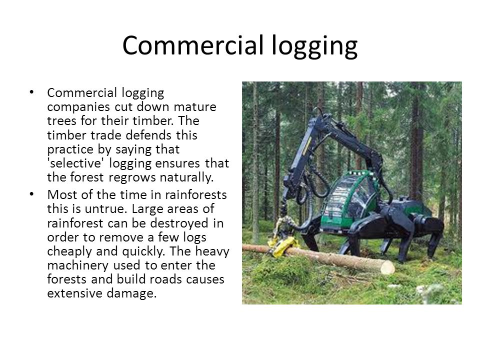 Commercial logging Commercial logging companies cut down mature trees for their timber.