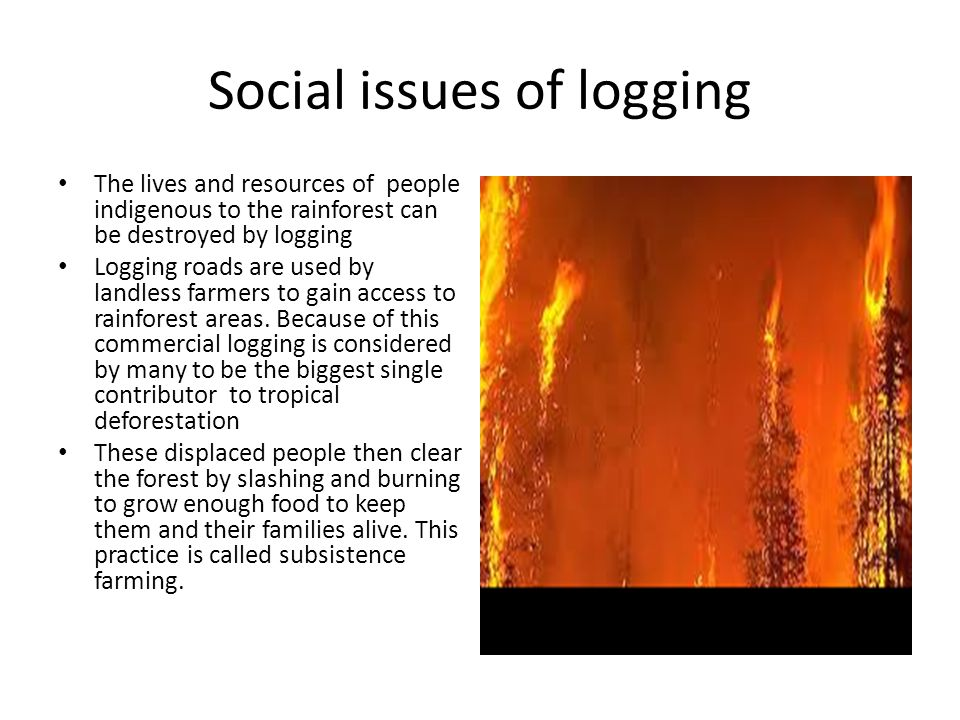 Social issues of logging The lives and resources of people indigenous to the rainforest can be destroyed by logging Logging roads are used by landless farmers to gain access to rainforest areas.