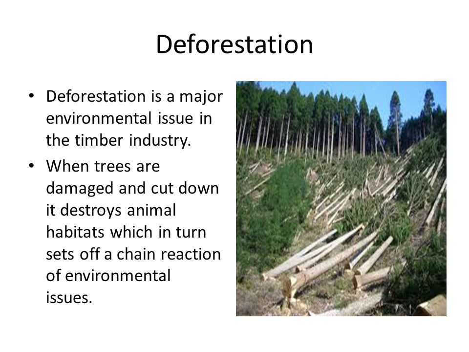 Deforestation Deforestation is a major environmental issue in the timber industry.