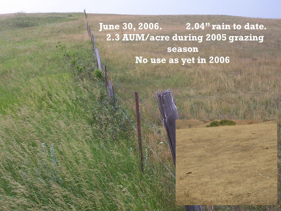 June 30, 2006. 2.04 rain to date. 2.3 AUM/acre during 2005 grazing season No use as yet in 2006