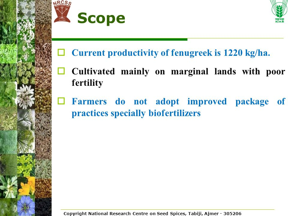 Copyright National Research Centre on Seed Spices, Tabiji, Ajmer - 305206 Scope  Current productivity of fenugreek is 1220 kg/ha.