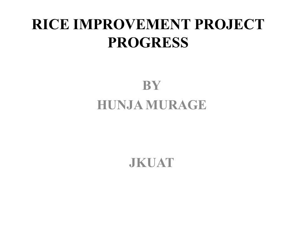 RICE IMPROVEMENT PROJECT PROGRESS BY HUNJA MURAGE JKUAT