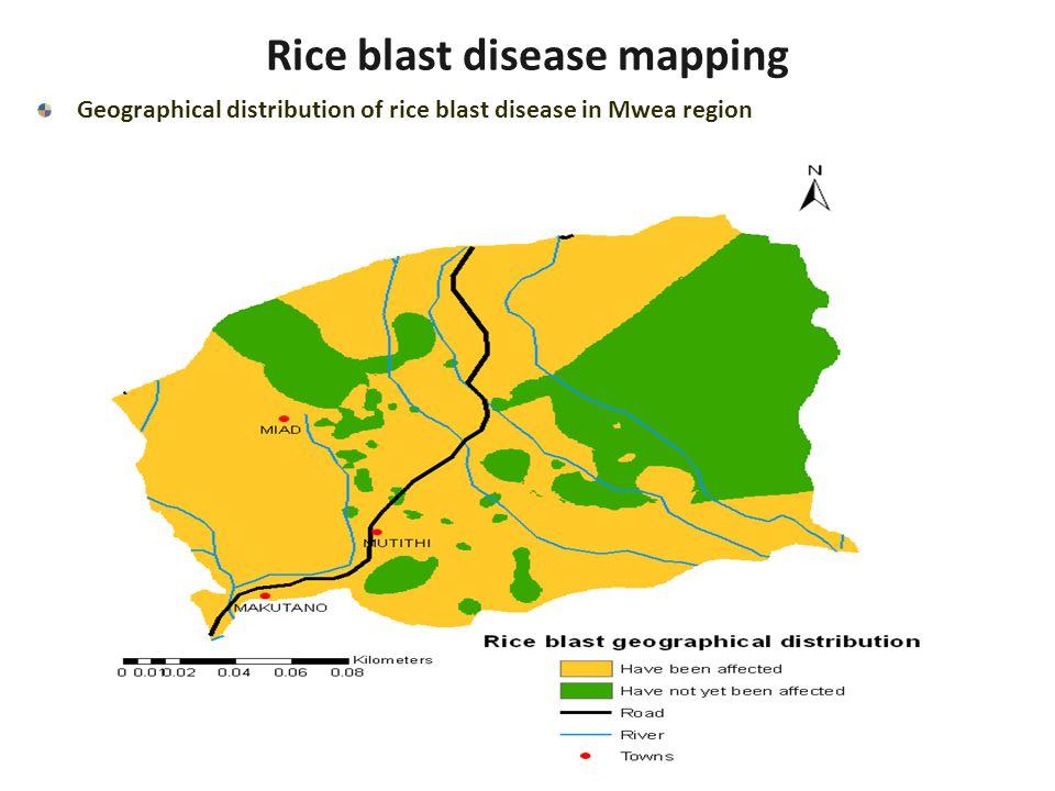 Geographical distribution of rice blast disease in Mwea region Rice blast disease mapping