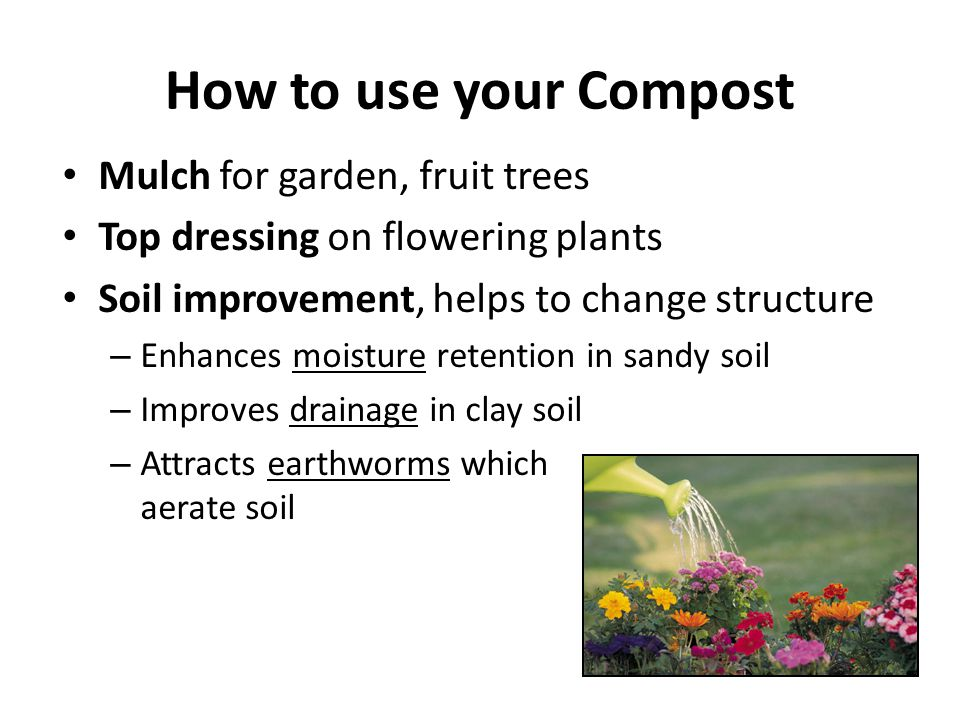 How to use your Compost Mulch for garden, fruit trees Top dressing on flowering plants Soil improvement, helps to change structure – Enhances moisture retention in sandy soil – Improves drainage in clay soil – Attracts earthworms which aerate soil