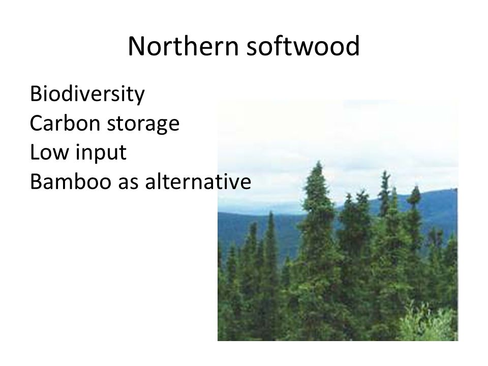 Northern softwood Biodiversity Carbon storage Low input Bamboo as alternative