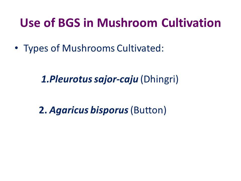 Use of BGS in Mushroom Cultivation Types of Mushrooms Cultivated: 1.Pleurotus sajor-caju (Dhingri) 2.