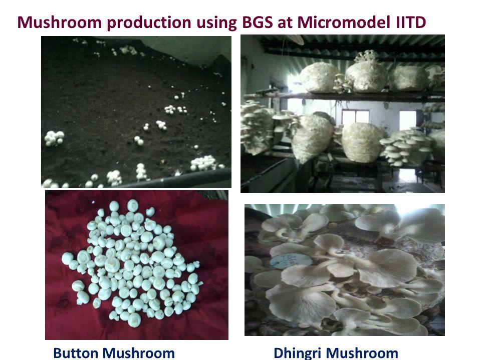 Mushroom production using BGS at Micromodel IITD Button MushroomDhingri Mushroom