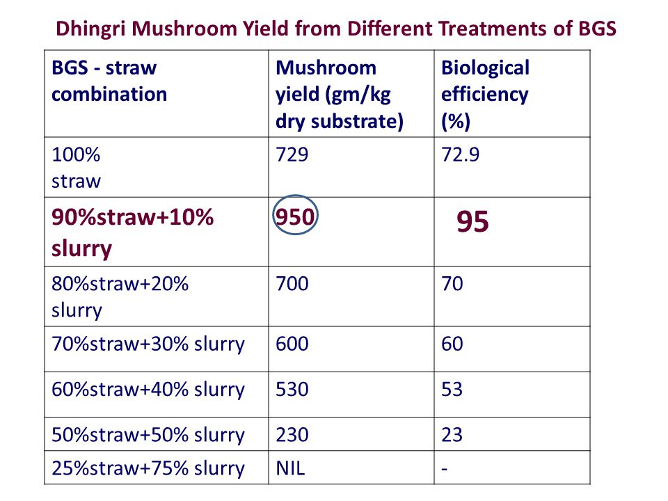 Dhingri Mushroom Yield from Different Treatments of BGS BGS - straw combination Mushroom yield (gm/kg dry substrate) Biological efficiency (%) 100% straw 72972.9 90%straw+10% slurry 950 95 80%straw+20% slurry 70070 70%straw+30% slurry60060 60%straw+40% slurry53053 50%straw+50% slurry23023 25%straw+75% slurryNIL-