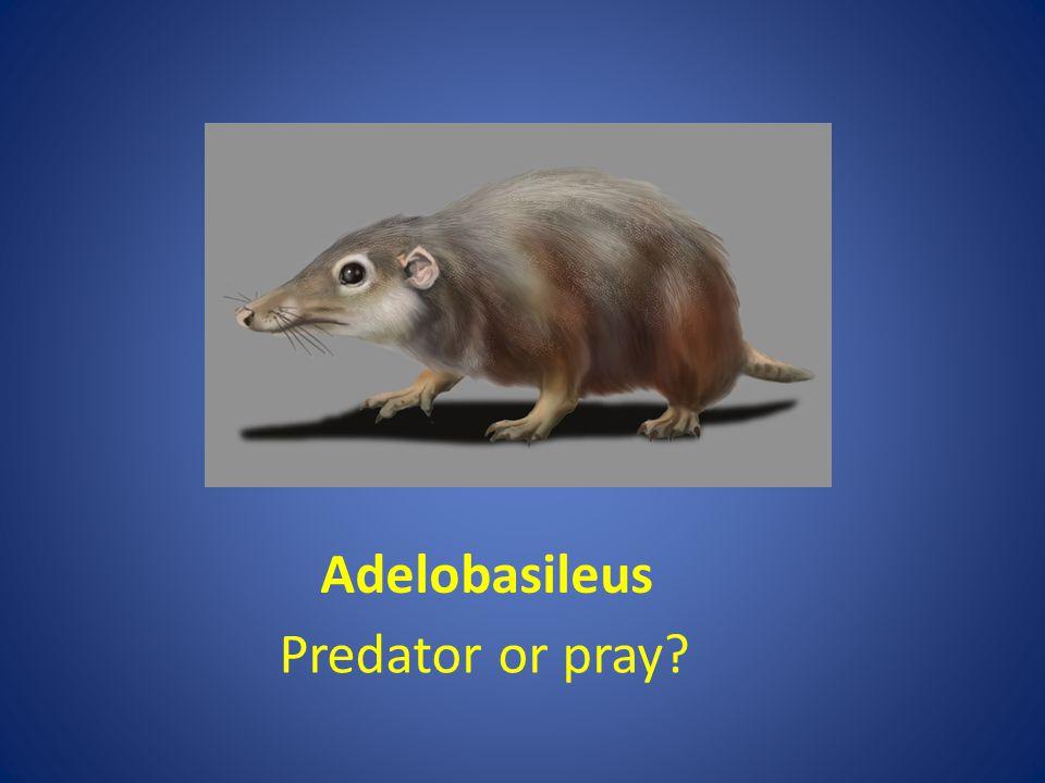 adelobasileus adelobasileus Adelobasileus Predator or pray