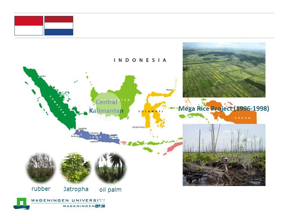 Central Kalimantan Mega Rice Project (1996-1998) rubber oil palm Jatropha