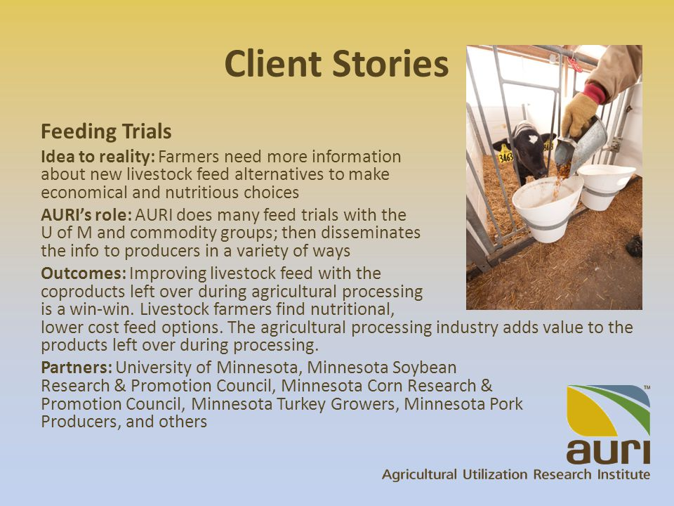 Client Stories Feeding Trials Idea to reality: Farmers need more information about new livestock feed alternatives to make economical and nutritious choices AURI's role: AURI does many feed trials with the U of M and commodity groups; then disseminates the info to producers in a variety of ways Outcomes: Improving livestock feed with the coproducts left over during agricultural processing is a win-win.
