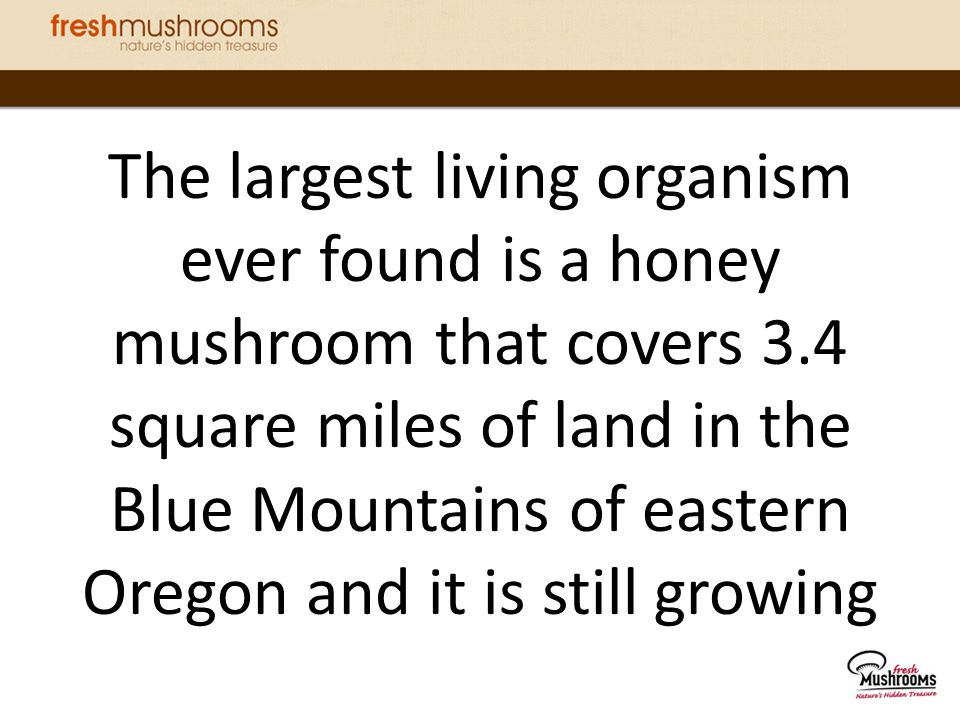 Mushrooms are the only item on the produce aisle with Vitamin D