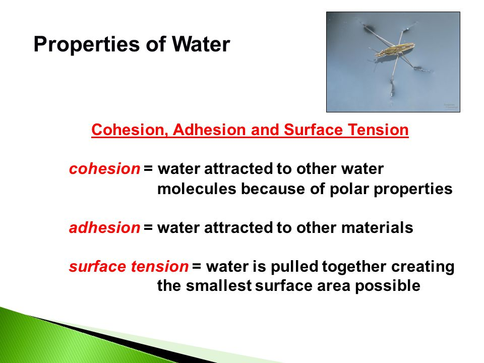 Properties of Water Water is the solvent of Life! Solute – substance dissolved in a solvent to form a solution Solvent – fluid that dissolves solutes