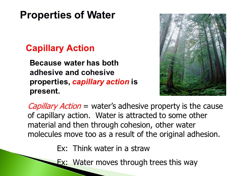Properties of Water cohesion = water attracted to other water molecules because of polar properties adhesion = water attracted to other materials surf