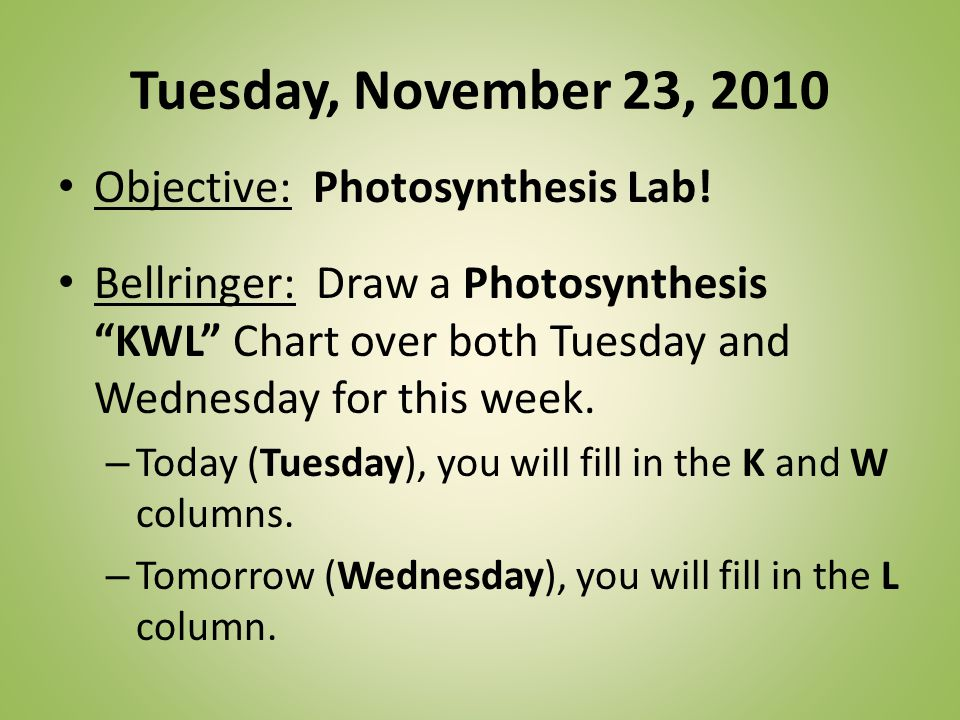Tuesday, November 23, 2010 Objective: Photosynthesis Lab.