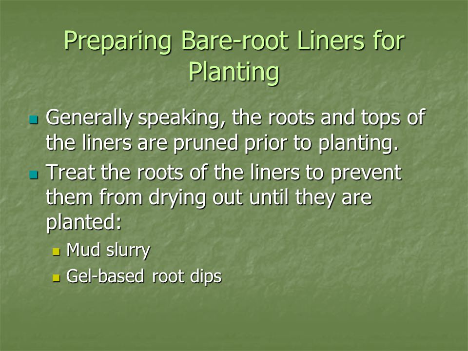 Preparing Bare-root Liners for Planting Generally speaking, the roots and tops of the liners are pruned prior to planting.