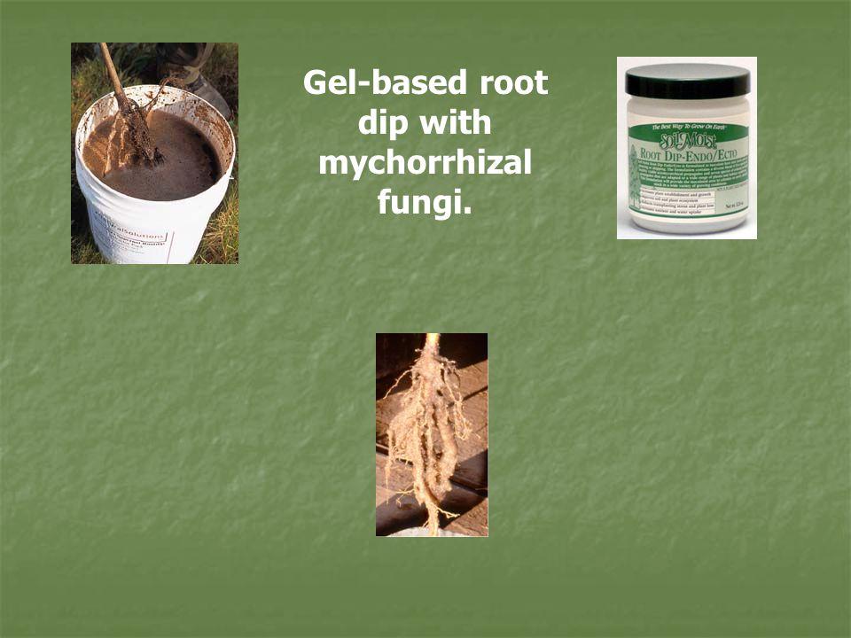 Gel-based root dip with mychorrhizal fungi.