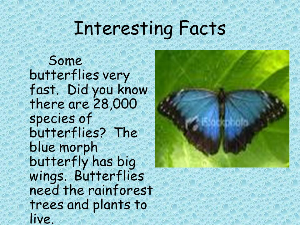 Interesting Facts Some butterflies very fast. Did you know there are 28,000 species of butterflies.