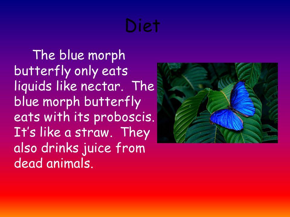 Predators and Prey A blue morph butterfly's predators is a jaguar.
