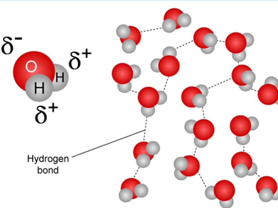 2.2.1 Water molecules are polar and hydrogen bonds form between them. The partially-charged regions of the water molecule can attract other polar or c