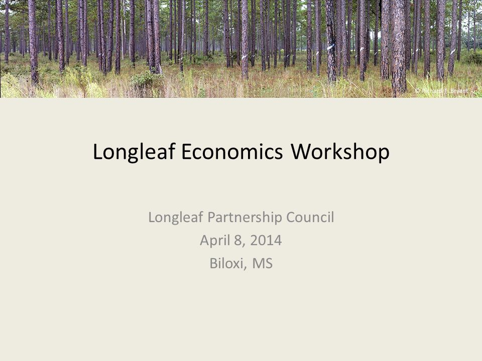 Overview NFWF interested in exploring longleaf economics Collaboration between NFWF, Jones Center and Larson & McGowin Longleaf economics is a very broad topic – Decided to narrow focus to explore perspectives of large- acreage landowners/managers on longleaf economics – Decided to restrict focus to economic returns currently available to landowners; did not include: Carbon Water Other ecosystem services © Richard T.