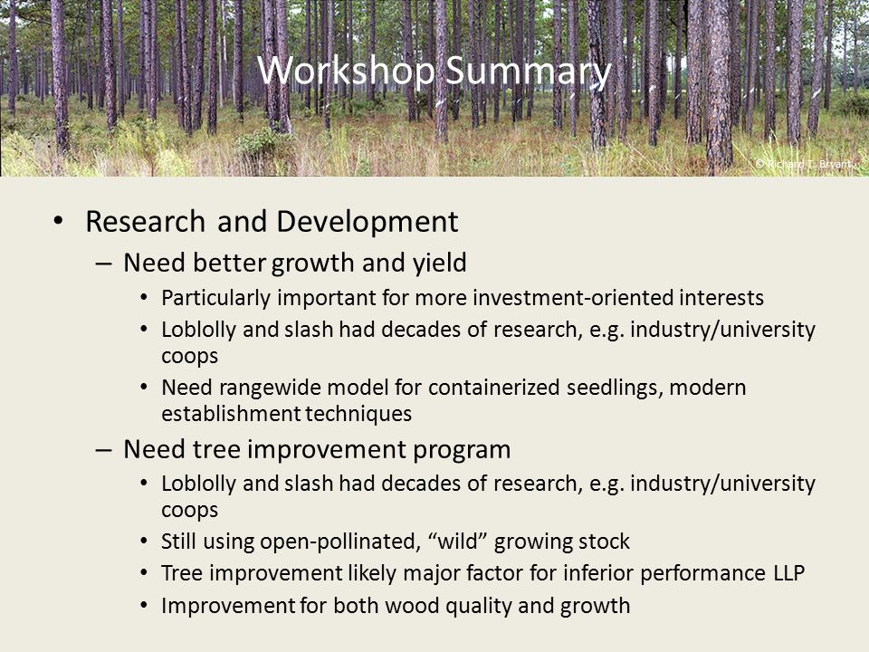 Workshop Summary Research and Development – Need better growth and yield Particularly important for more investment-oriented interests Loblolly and slash had decades of research, e.g.