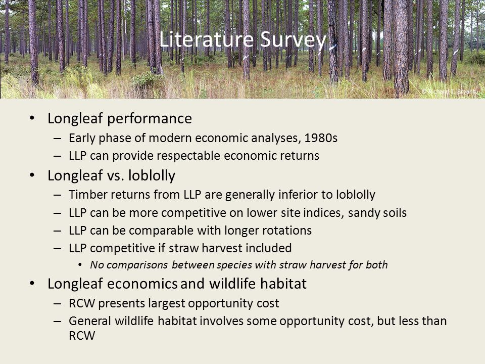Literature Survey Longleaf performance – Early phase of modern economic analyses, 1980s – LLP can provide respectable economic returns Longleaf vs.
