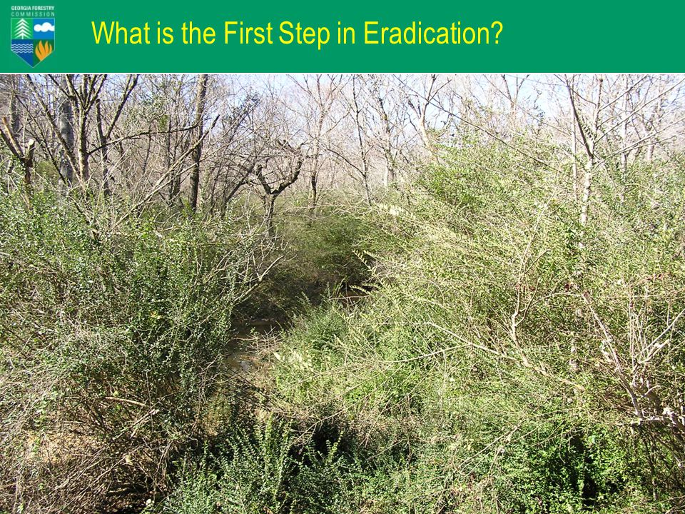 What is the First Step in Eradication?