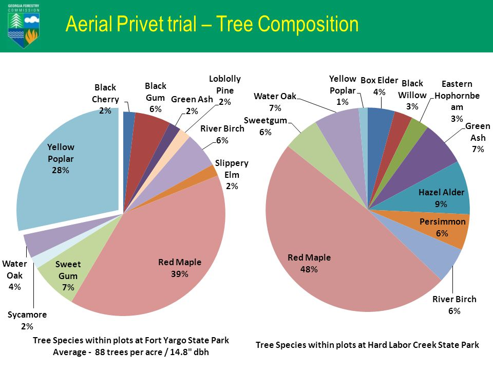 Aerial Privet trial – Tree Composition