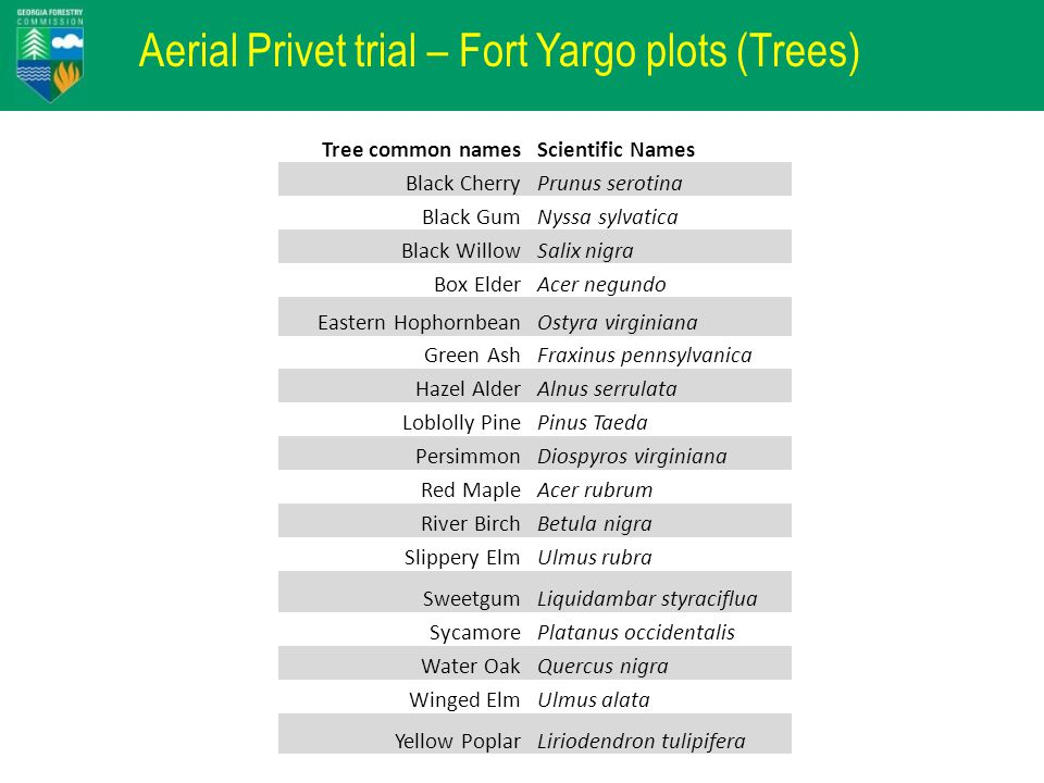 Aerial Privet trial – Fort Yargo plots (Trees) Tree common namesScientific Names Black CherryPrunus serotina Black GumNyssa sylvatica Black WillowSalix nigra Box ElderAcer negundo Eastern HophornbeanOstyra virginiana Green AshFraxinus pennsylvanica Hazel AlderAlnus serrulata Loblolly PinePinus Taeda PersimmonDiospyros virginiana Red MapleAcer rubrum River BirchBetula nigra Slippery ElmUlmus rubra SweetgumLiquidambar styraciflua SycamorePlatanus occidentalis Water OakQuercus nigra Winged ElmUlmus alata Yellow PoplarLiriodendron tulipifera