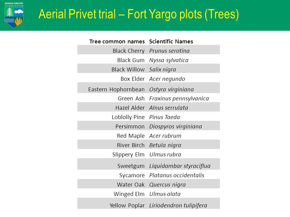 Aerial Privet trial – Fort Yargo plots (Trees) Tree common namesScientific Names Black CherryPrunus serotina Black GumNyssa sylvatica Black WillowSali