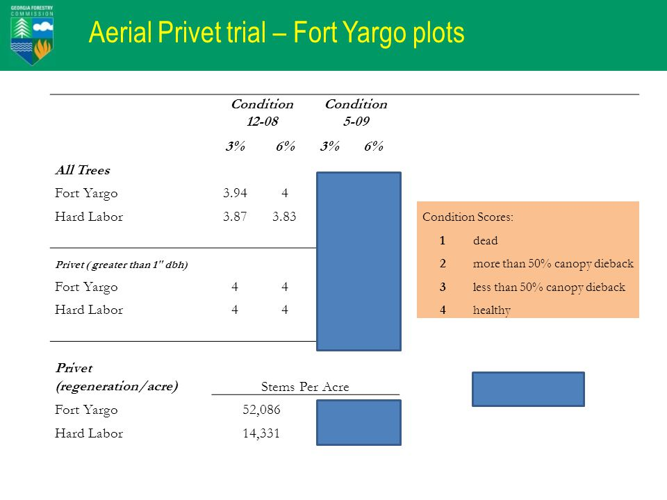 Aerial Privet trial – Fort Yargo plots Condition 12-08 Condition 5-09 3%6%3%6% All Trees Fort Yargo3.944 3.95 Hard Labor3.873.833.863.54* Condition Scores: 1dead Privet ( greater than 1 dbh) 2more than 50% canopy dieback Fort Yargo441.421.12 3less than 50% canopy dieback Hard Labor441.911.05 4healthy Privet (regeneration/acre)Stems Per Acre * Persimmon impact Fort Yargo52,0868,938 Hard Labor14,3313,852