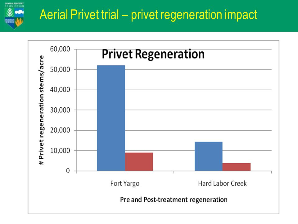 Aerial Privet trial – privet regeneration impact