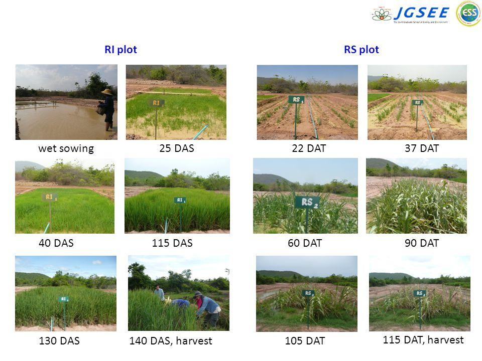 RI plot wet sowing25 DAS 40 DAS115 DAS 130 DAS140 DAS, harvest RS plot 22 DAT37 DAT 60 DAT90 DAT 115 DAT, harvest 105 DAT