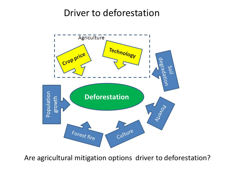 Driver to deforestation Deforestation Crop price Technology Poverty Population growth Forest fire Soil degradation Agriculture Are agricultural mitigation options driver to deforestation.
