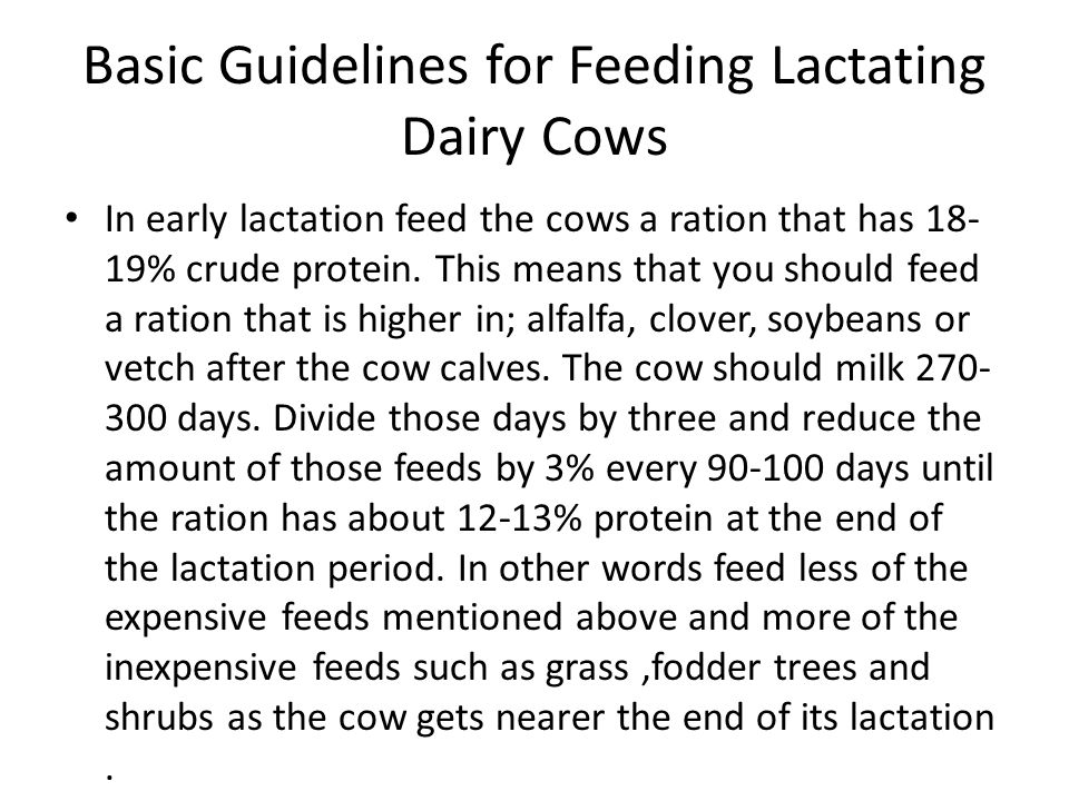 Basic Guidelines for Feeding lactating Dairy Cows Make sure that if feeds that are high in energy are available; corn, wheat, barley or oats, that the lactating cow has an ample amount of those feeds in its diet.