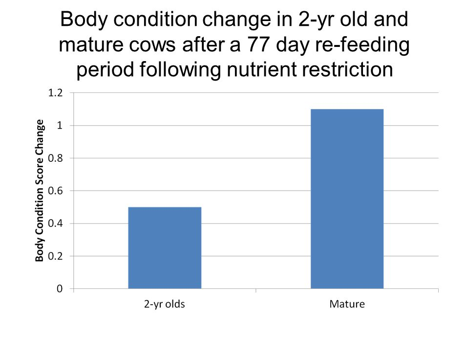 Body condition change in 2-yr old and mature cows after a 77 day re-feeding period following nutrient restriction