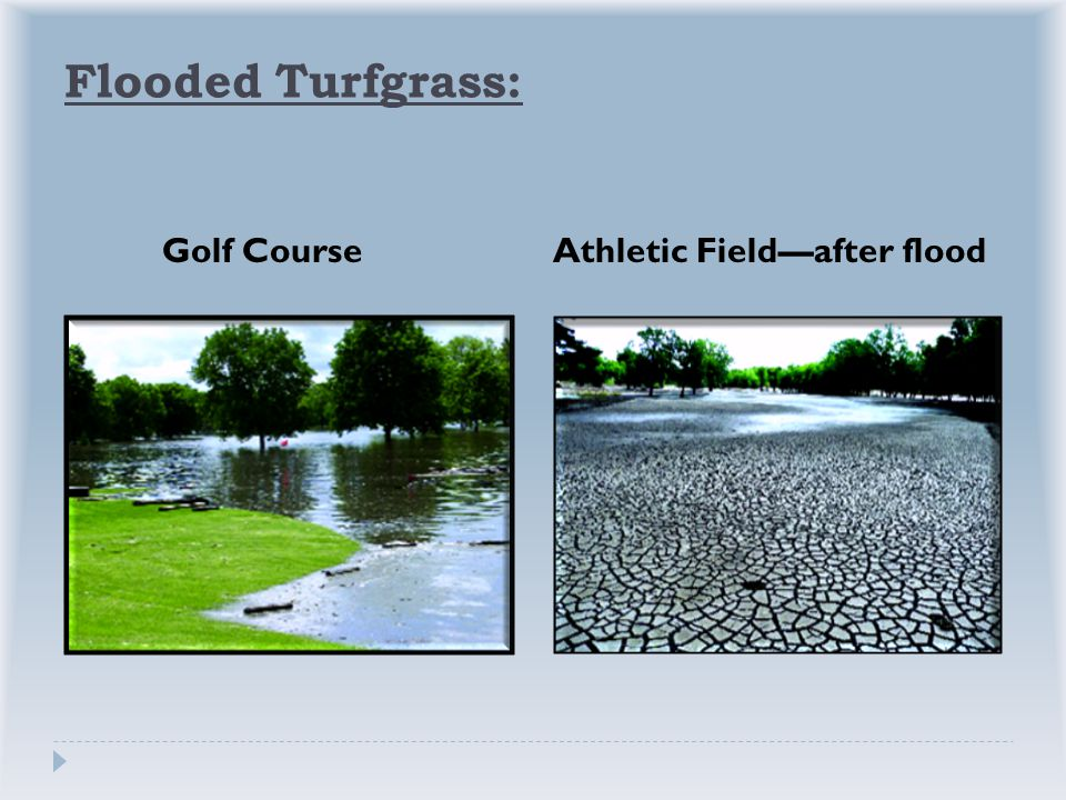 Flooded Turfgrass: Golf CourseAthletic Field—after flood