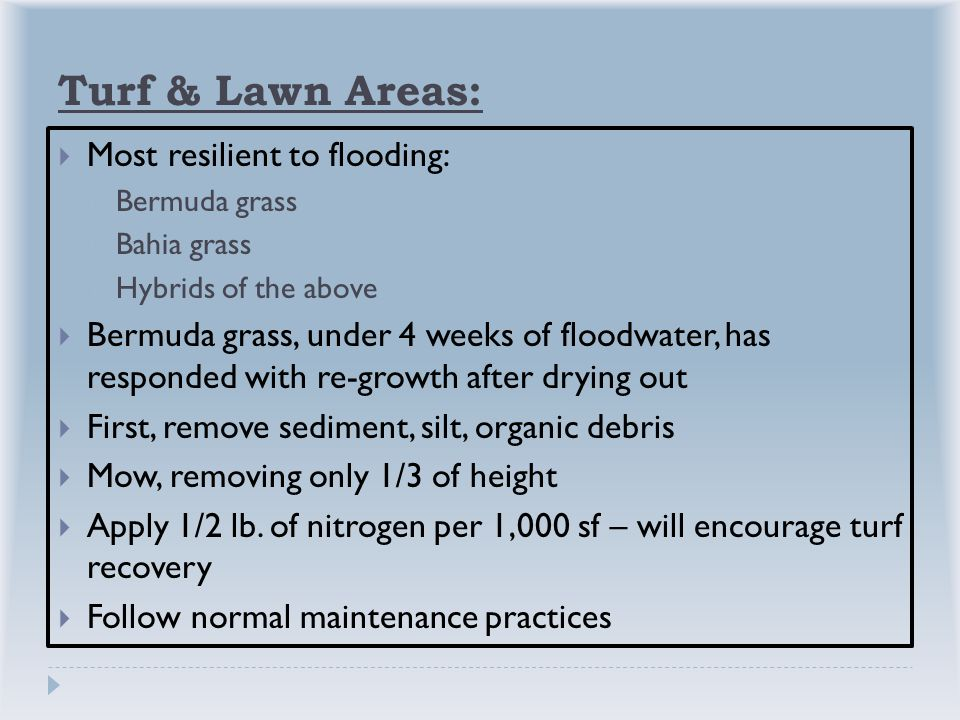 Turf & Lawn Areas:  Most resilient to flooding:  Bermuda grass  Bahia grass  Hybrids of the above  Bermuda grass, under 4 weeks of floodwater, has responded with re-growth after drying out  First, remove sediment, silt, organic debris  Mow, removing only 1/3 of height  Apply 1/2 lb.