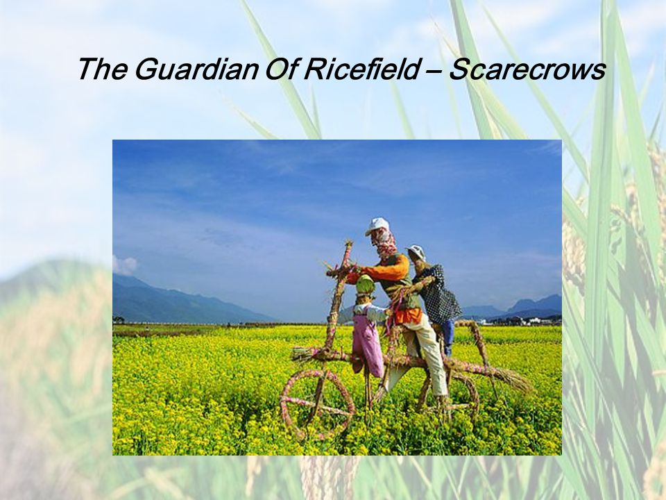 The History of Scarecrows Japanese Scarecrows Japanese farmers also began making scarecrows to protect their rice fields, about the same time the Greeks and Romans made their wooden statues.