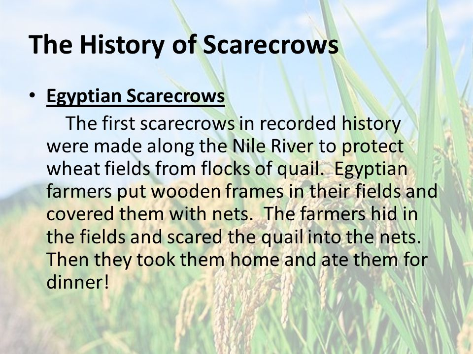 The History of Scarecrows Egyptian Scarecrows The first scarecrows in recorded history were made along the Nile River to protect wheat fields from flocks of quail.