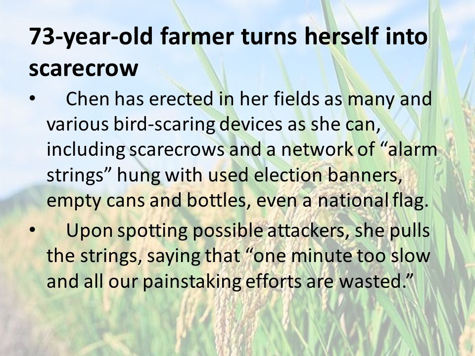 73-year-old farmer turns herself into scarecrow Chen has erected in her fields as many and various bird-scaring devices as she can, including scarecrows and a network of alarm strings hung with used election banners, empty cans and bottles, even a national flag.