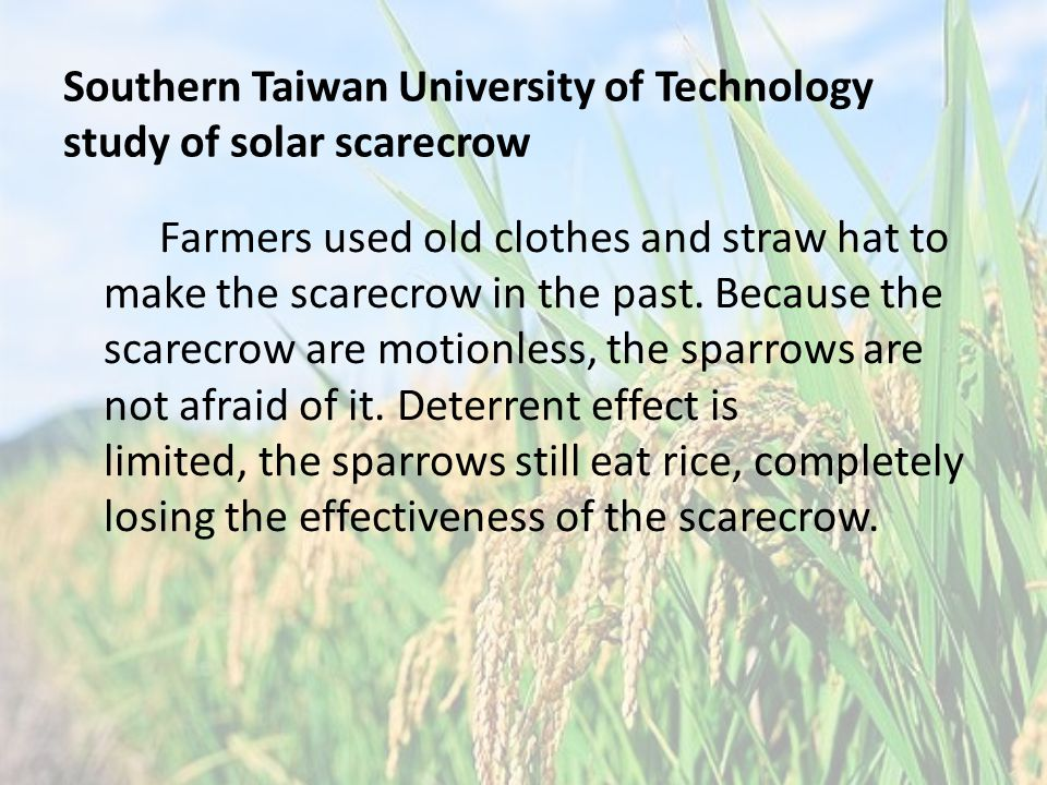 Farmers used old clothes and straw hat to make the scarecrow in the past.