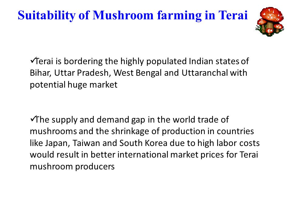 Suitability of Mushroom farming in Terai Terai is bordering the highly populated Indian states of Bihar, Uttar Pradesh, West Bengal and Uttaranchal with potential huge market The supply and demand gap in the world trade of mushrooms and the shrinkage of production in countries like Japan, Taiwan and South Korea due to high labor costs would result in better international market prices for Terai mushroom producers